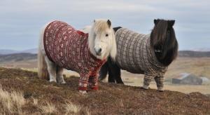 poni v sviterah predstavyat turistam prirodnye krasoty shotlandii Пони в свитерах представят туристам природные красоты Шотландии