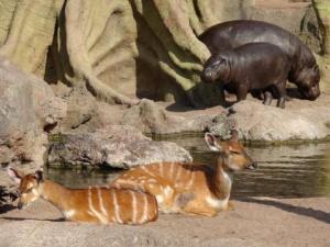posetiteli bioparka valensii stali svidetelyami rojdeniya detenysha antilopy Посетители биопарка Валенсии стали свидетелями рождения детеныша антилопы