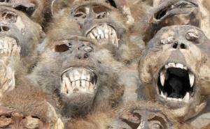 rynok chernoi magii v afrike – samyi koloritnyi v mire Рынок черной магии в Африке – самый колоритный в мире