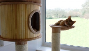 v anglii otkryli otel dlya koshek klassa lyuks В Англии открыли отель для кошек класса люкс