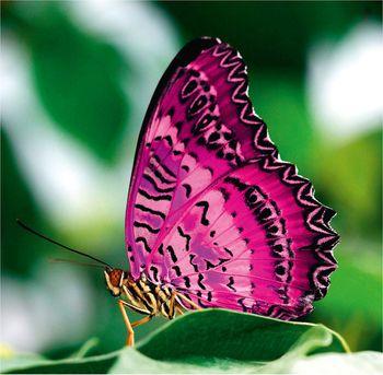 v bioparke rima mojno uvidet tropicheskih babochek В биопарке Рима можно увидеть тропических бабочек