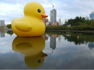 v gavani sidneya poselilsya gigantskii jeltyi utenok В гавани Сиднея поселился гигантский желтый утенок