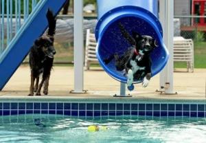 v ispanii otkrylsya akvapark dlya sobak В Испании открылся аквапарк для собак