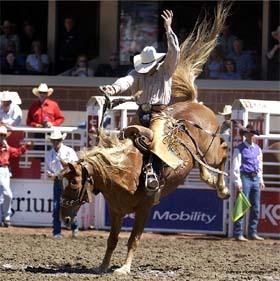 v las vegase proidet final grandioznogo rodeo В Лас Вегасе пройдет финал грандиозного родео