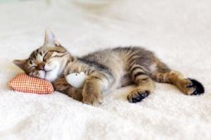 v parije otkroetsya lyuksovyi otel dlya koshek В Париже откроется люксовый отель для кошек