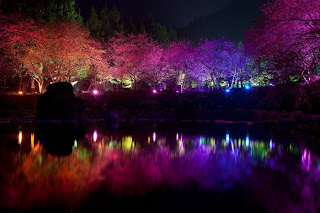 v taivane startoval festival cvetushei vishni В Тайване стартовал Фестиваль цветущей вишни