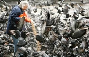 v vene budut shtrafovat za kormlenie golubei В Вене будут штрафовать за кормление голубей