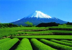 yaponiya jdet turistov na osennie meropriyatiya Япония ждет туристов на осенние мероприятия