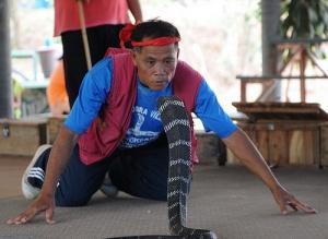zaklinateli zmei i zmeinye boi v tailande Заклинатели змей и змеиные бои в Таиланде