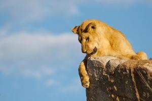 zambiya otmenyaet zapret na ohotu chtoby privlech turistov Замбия отменяет запрет на охоту, чтобы привлечь туристов