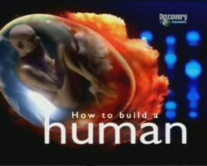 discoveryhow to build a human 300x240 Discovery. Как построить человека (How to Build a Human) 4 серии