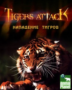 discoverytigers attack 240x300 Discovery. Тигры атакуют (Tigers Attack)