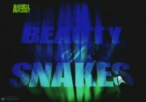 discovery beauty of snakes 300x210 Discovery. Красота змей (Beauty of Snakes)