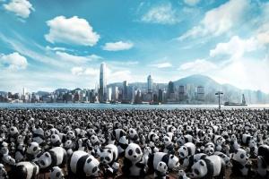 1 600 панд отправились в кругосветное путешествие