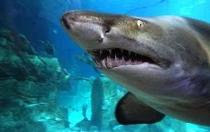 posetiteli zooparka v kaliningrade doveli akulu do nervnogo sryva Посетители зоопарка в Калининграде довели акулу до нервного срыва