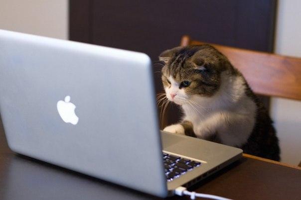 50 porazitelnyh faktov o kotikah 50 поразительных фактов о котиках