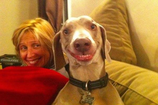 50 porazitelnyh faktov o sobakah 50 поразительных фактов о собаках