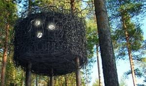 v podmoskove poyavyatsya mini oteli na derevyah В Подмосковье появятся мини отели на деревьях