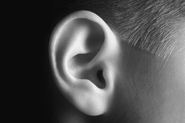 vashe pravoe uho luchshe slyshit rech a levoe muzyku Ваше правое ухо лучше слышит речь, а левое — музыку