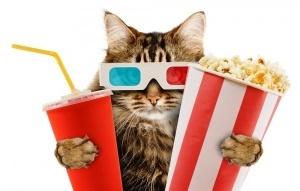 pervyi v mire kinoteatr s koshkami poyavitsya v londone Первый в мире кинотеатр с кошками появится в Лондоне