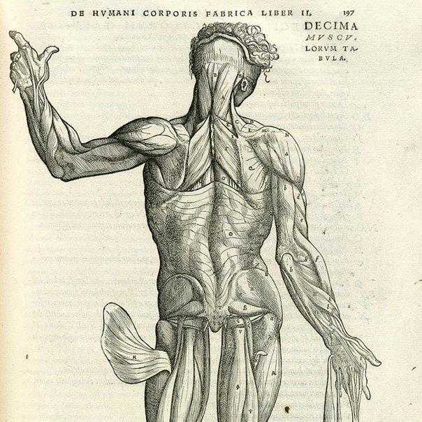 10 samyh interesnyh faktov o myshcah 10 самых интересных фактов о мышцах