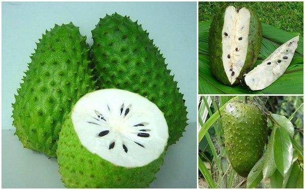 frukt kotoryi lechit rak Фрукт, который лечит рак