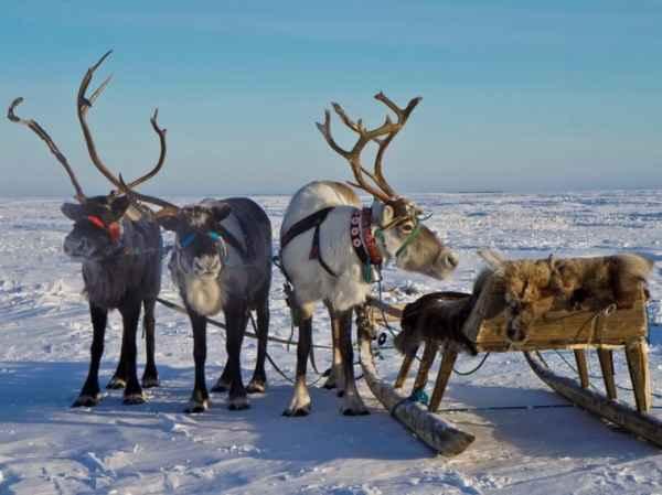 pyat samyh neobychnyh vidov zimnego otdyha 7 Пять самых необычных видов зимнего отдыха