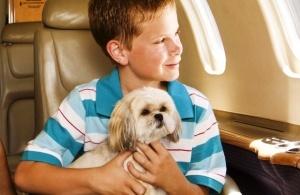 aviabilet dlya sobaki mojet oboitis doroje chem dlya hozyaina Авиабилет для собаки может обойтись дороже, чем для хозяина