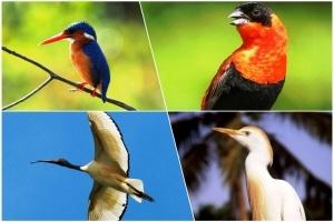 ekzotika prazdnik dlya lyubitelei ptic proidet v solnechnoi gambii Экзотика: праздник для любителей птиц пройдет в солнечной Гамбии