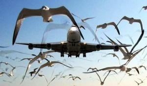 pobeda pojalovalas chaike na ptic «Победа» пожаловалась Чайке на птиц