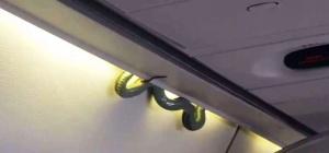 zmeya okazalas na bortu samoleta v meksike Змея оказалась на борту самолета в Мексике