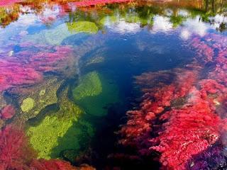raznocvetnaya reka v kolumbii Разноцветная река в Колумбии