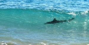 shest plyajei barselony zakryty iz za akul Шесть пляжей Барселоны закрыты из за акул