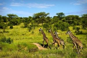 vlasti kenii prizyvayut turistov ne otkazyvatsya ot poezdok Власти Кении призывают туристов не отказываться от поездок