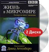 bbclife in the undergrowth BBC. Жизнь в микромире (BBC. Life in the Undergrowth) 5 серий