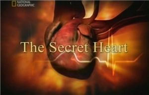 the secret heart The Secret Heart. Pumped   Секреты нашего сердца   Неутомимый насос